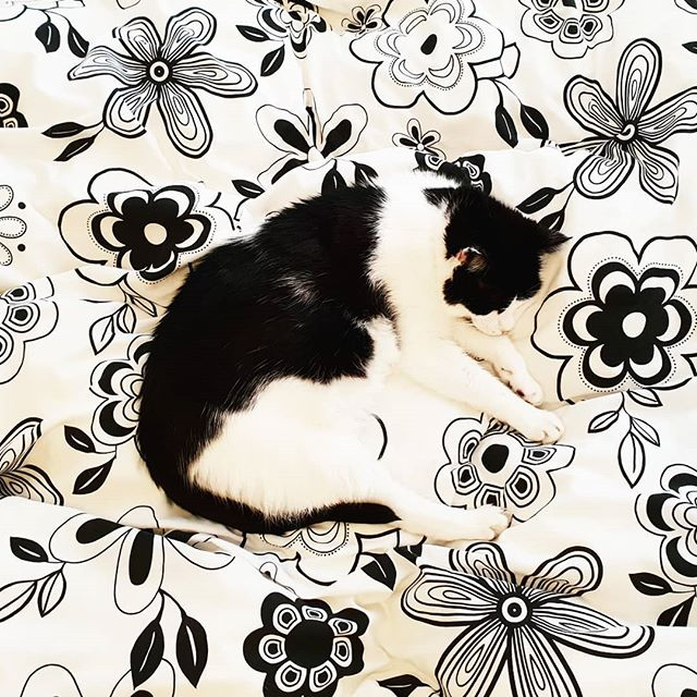Camouflaged 🐱 . . . #Cat #CatsOfInstagram #Camouflage #BlackAndWhiteCat #AdoptDontShop #CatLover