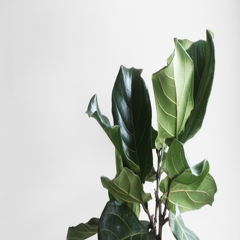 green-plant.jpg