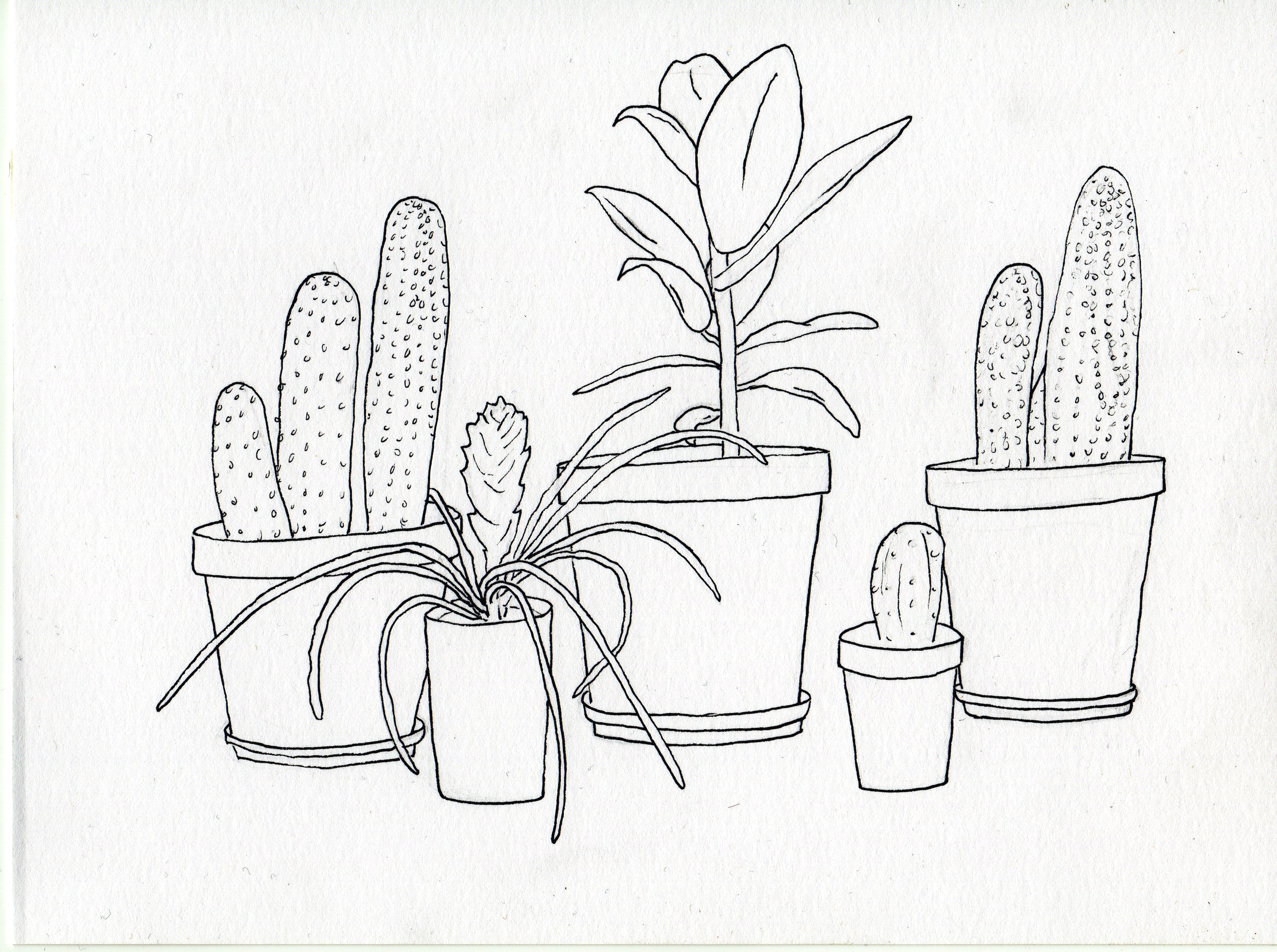 Three Cacti and two other dry plants internet.jpg