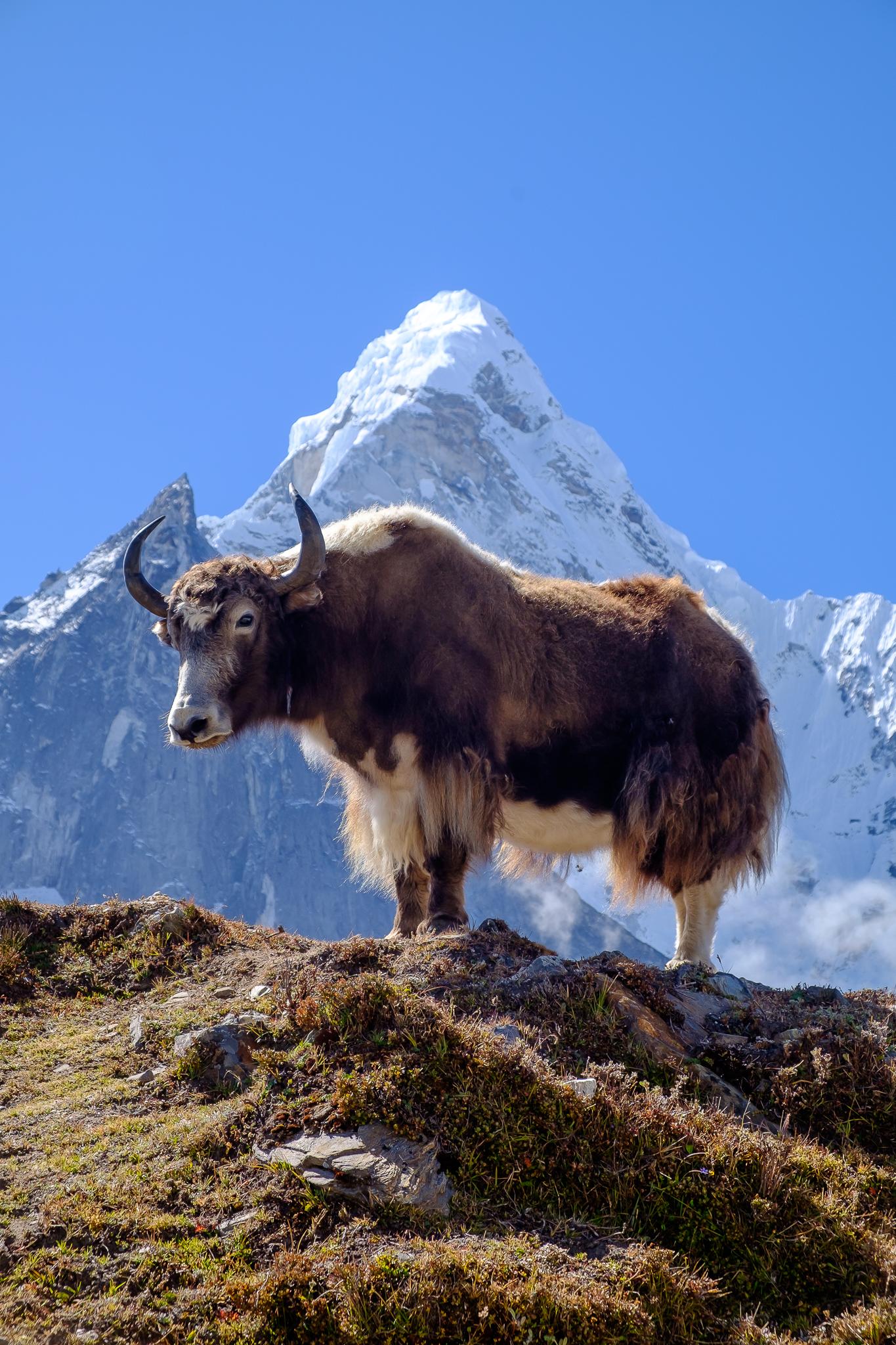 EverestTrekPart6_016.jpg