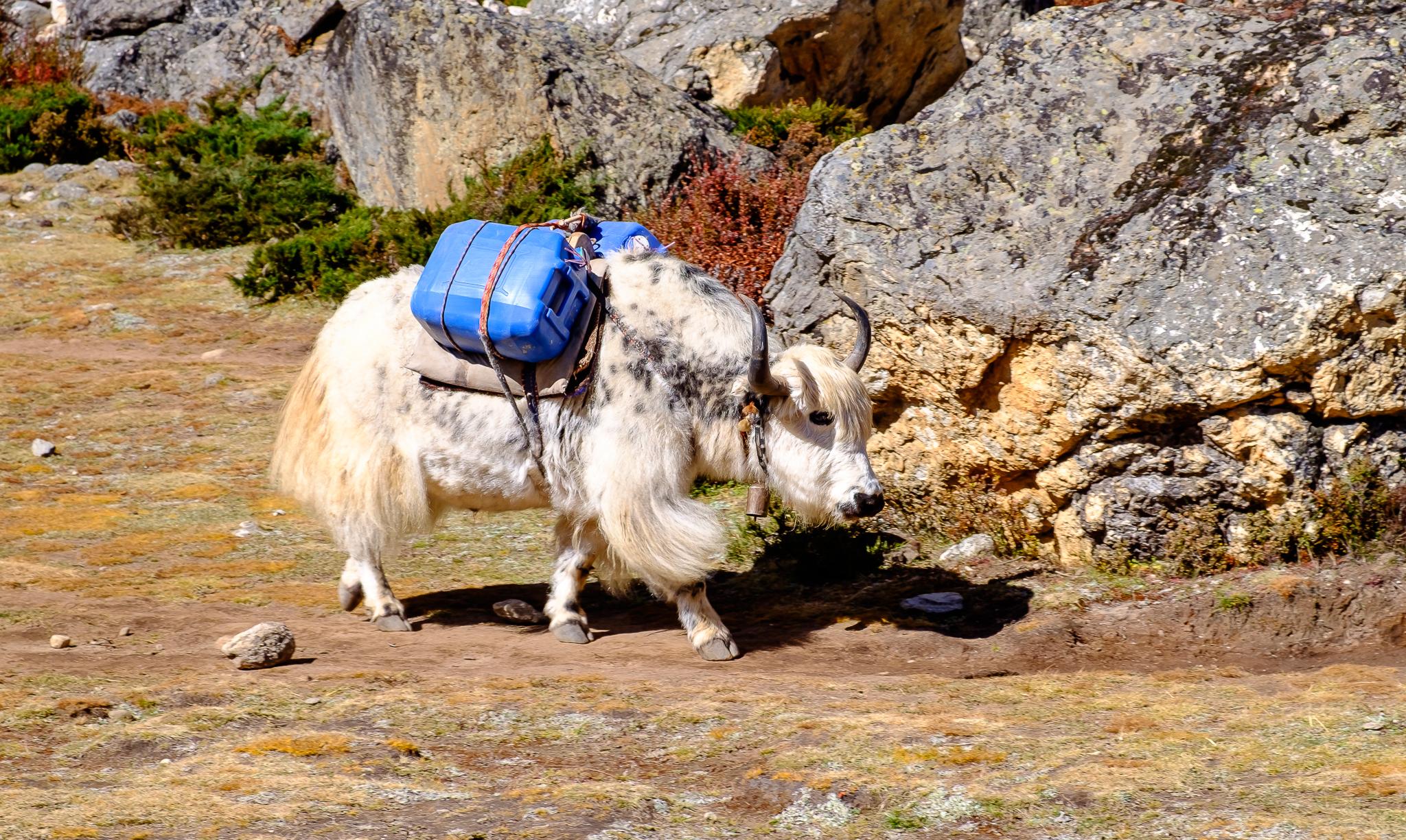 EverestTrekPart8_005.jpg