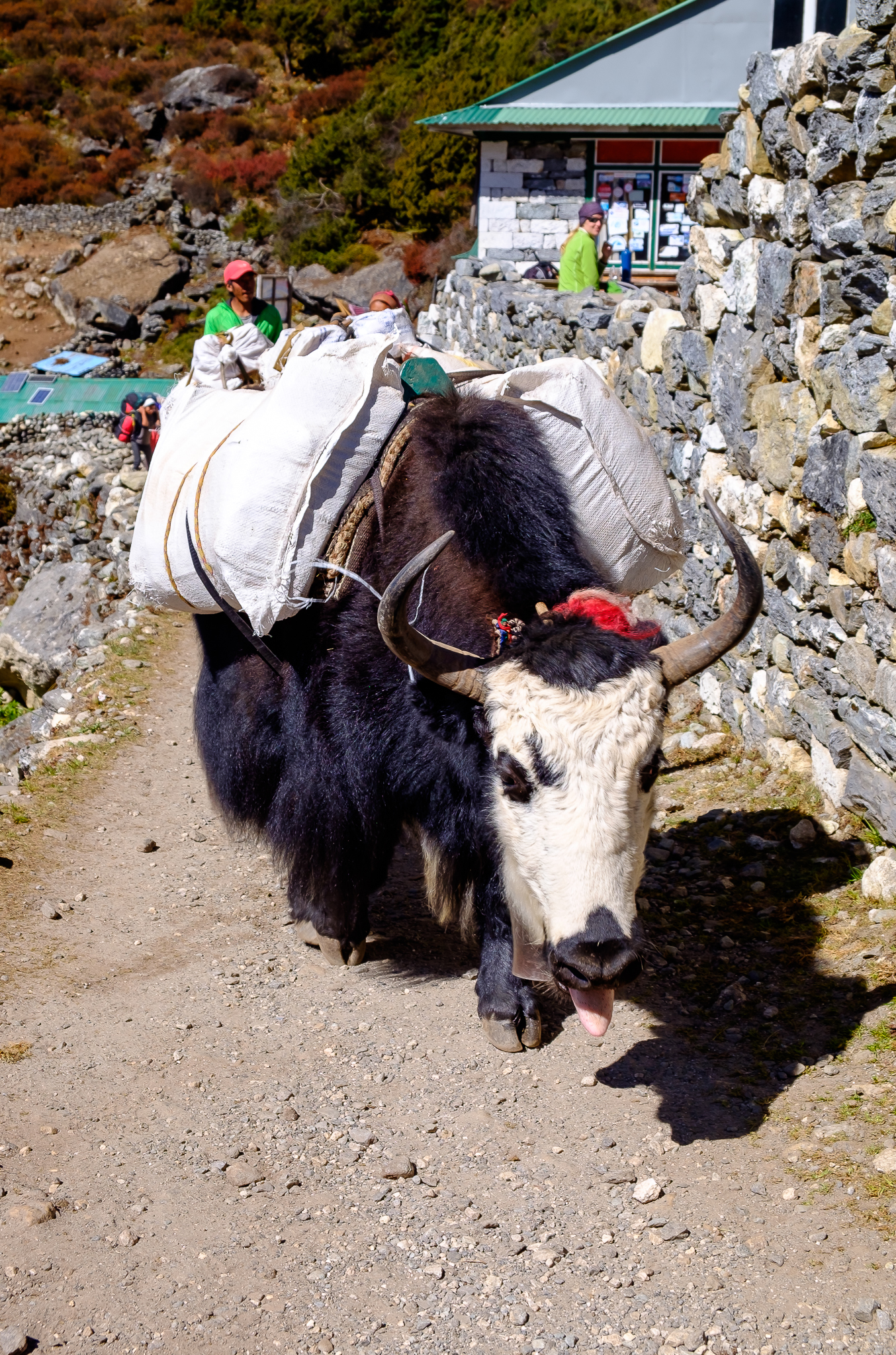 EverestTrekPart8_007.jpg