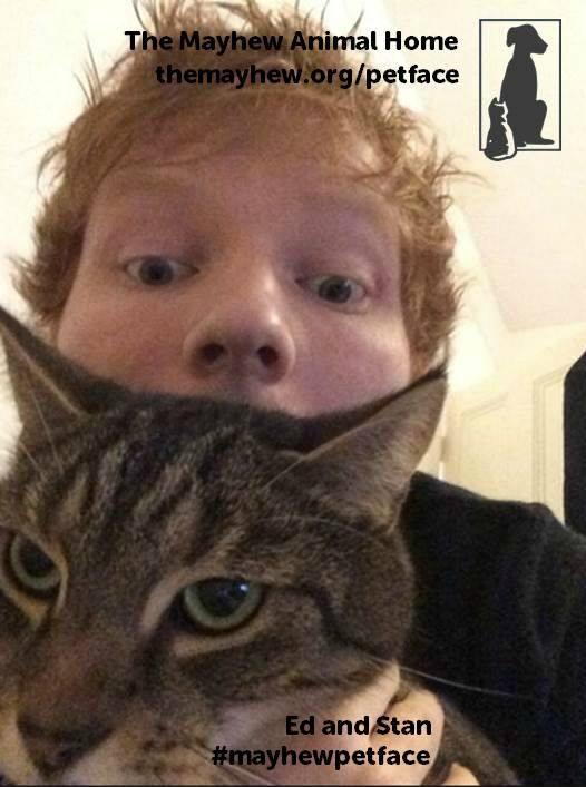 #MayhewPetFace Ed Sheeran