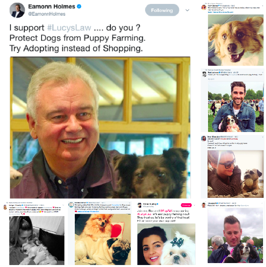 Celebrity Twitter Support #LucysLaw Campaign