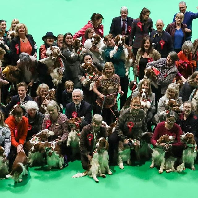 Doing our thing @Crufts #lucyslaw4Wales #crufts #endpuppyfarming