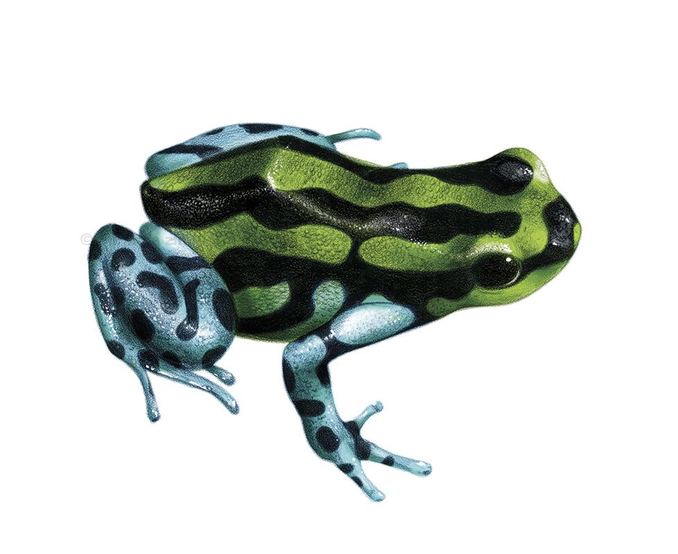froggo.png