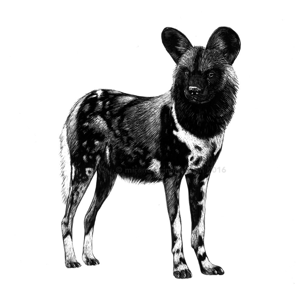 wilddog.png