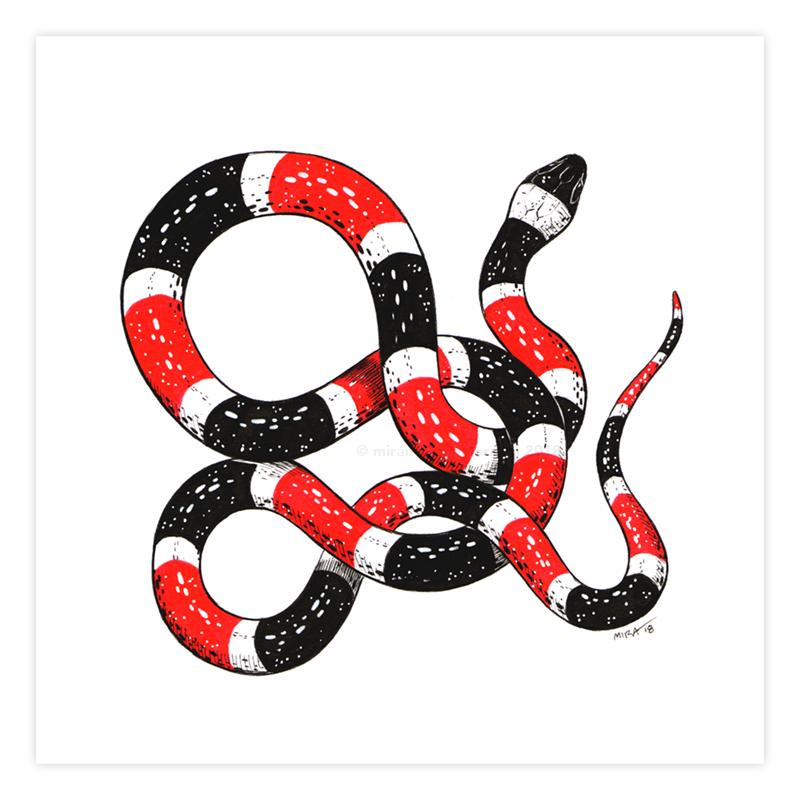 """""""Coral Snake""""  Pen + Ink, Digital , 5"""" x 5"""" // 11"""" x 11"""""""