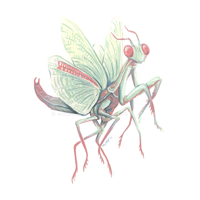 May2019_Mantis.png