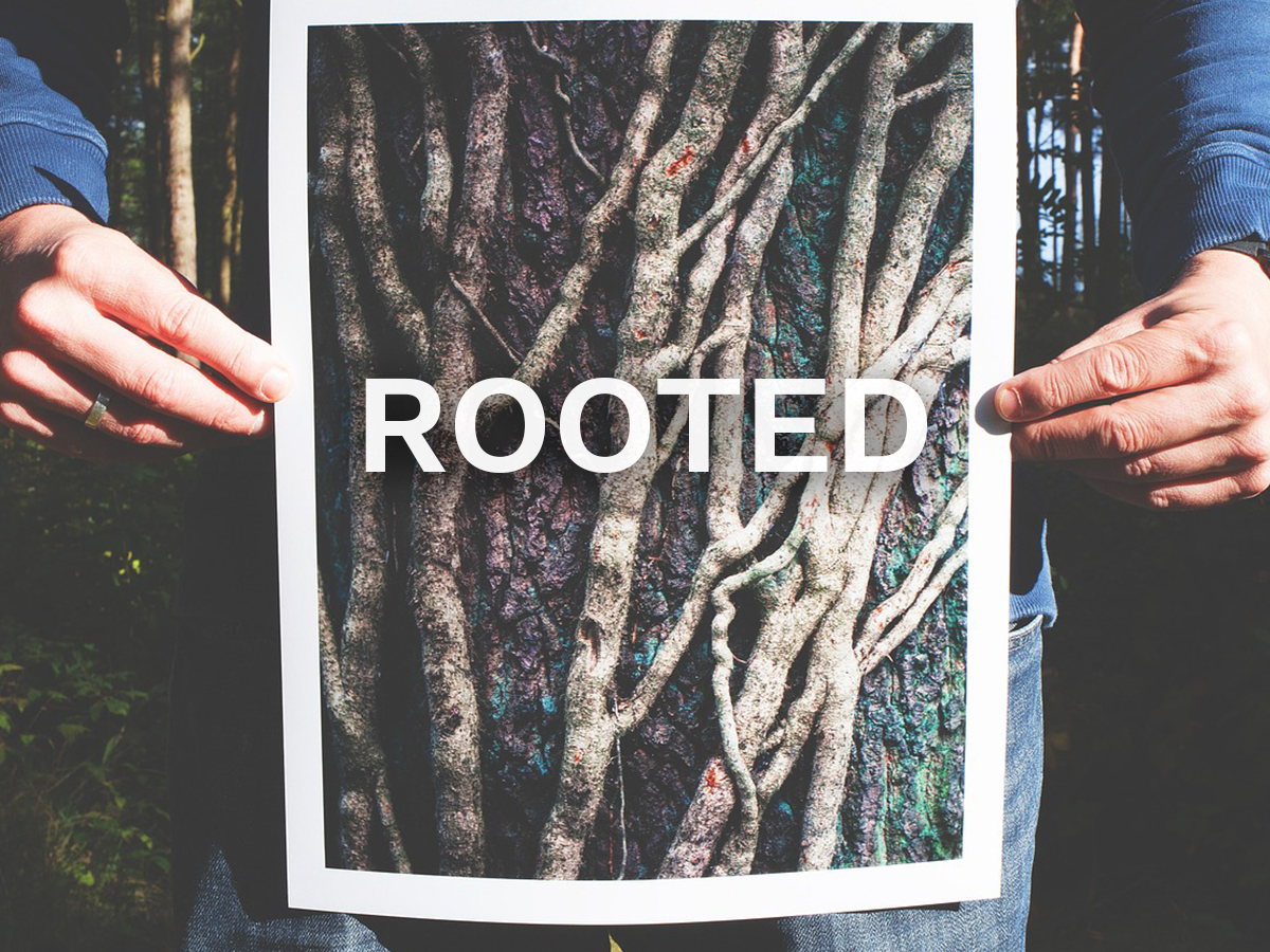Rooted.jpg