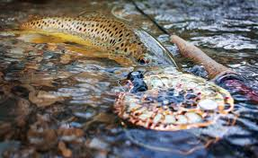 CATCH AND RELEASE - Conservation at every level is key to sustaining and preservine wildlife, including practices like catch and release.