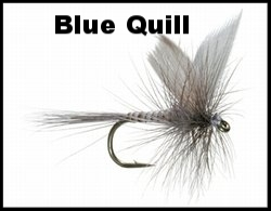 Blue Quill.jpg