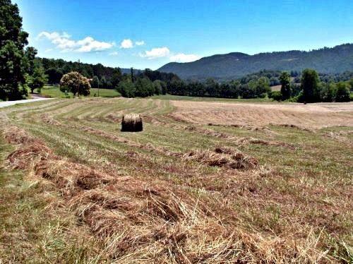 Cutting Hay.jpg
