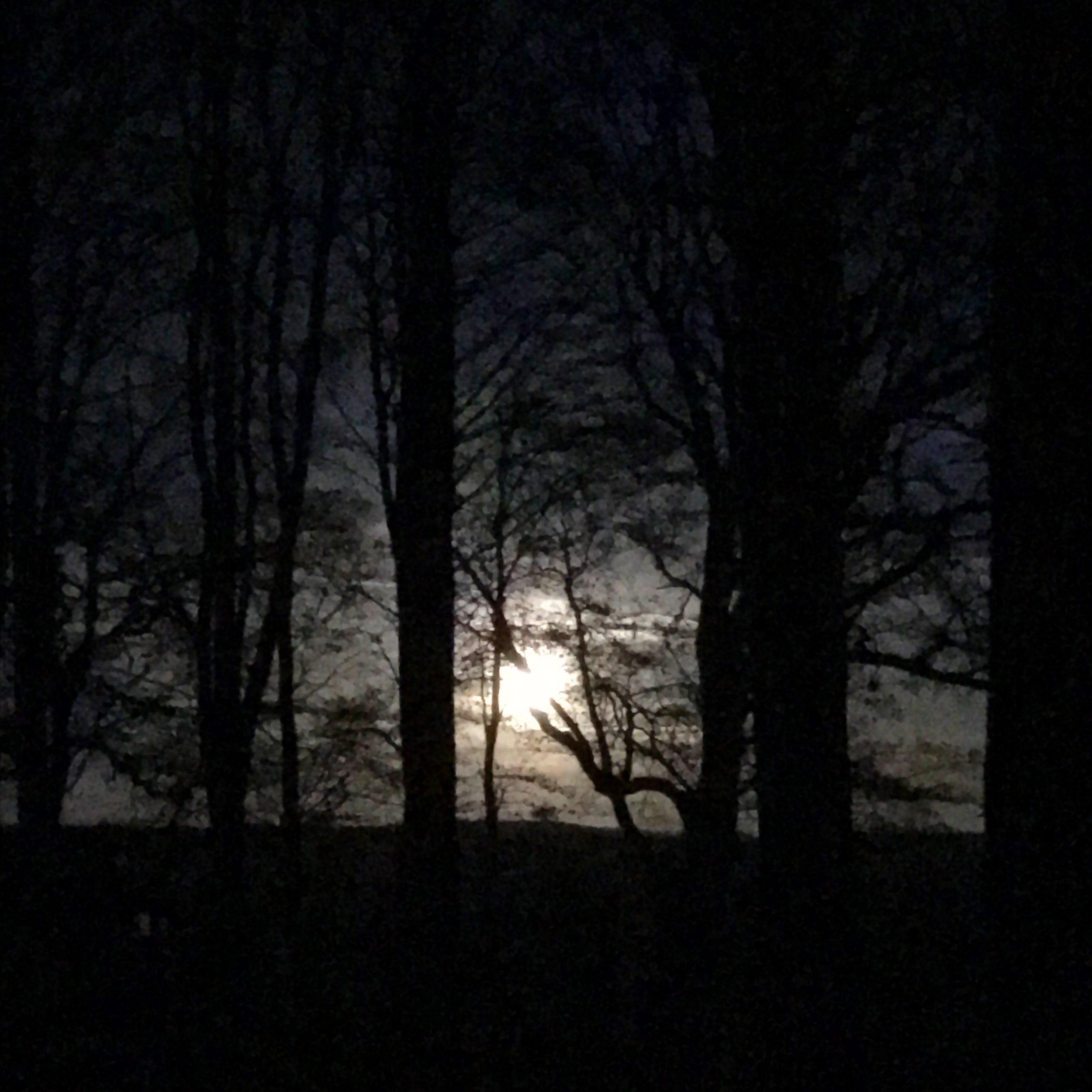 full moon energy through woodland