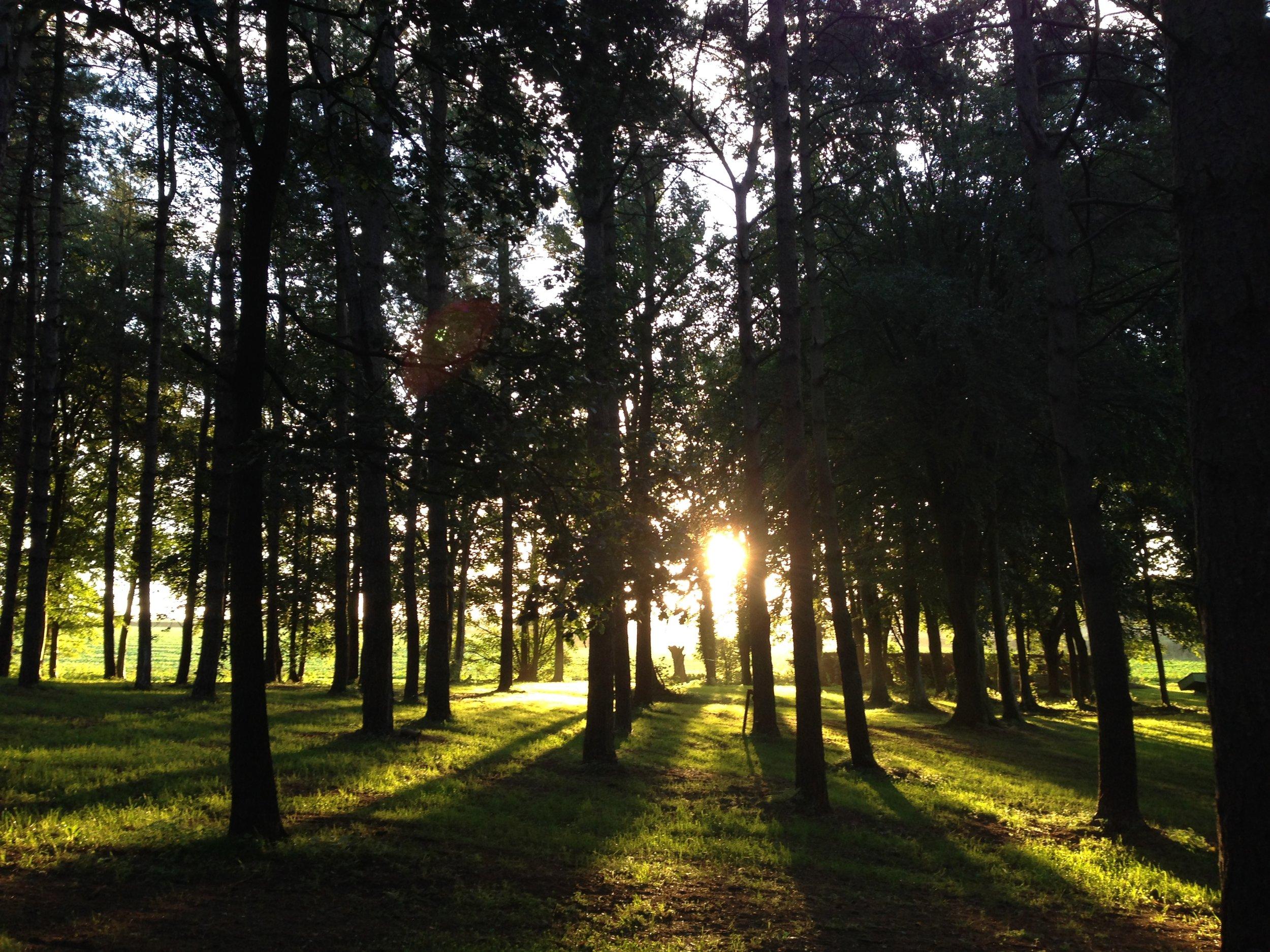 Woodland Venue Norfolk Glamping
