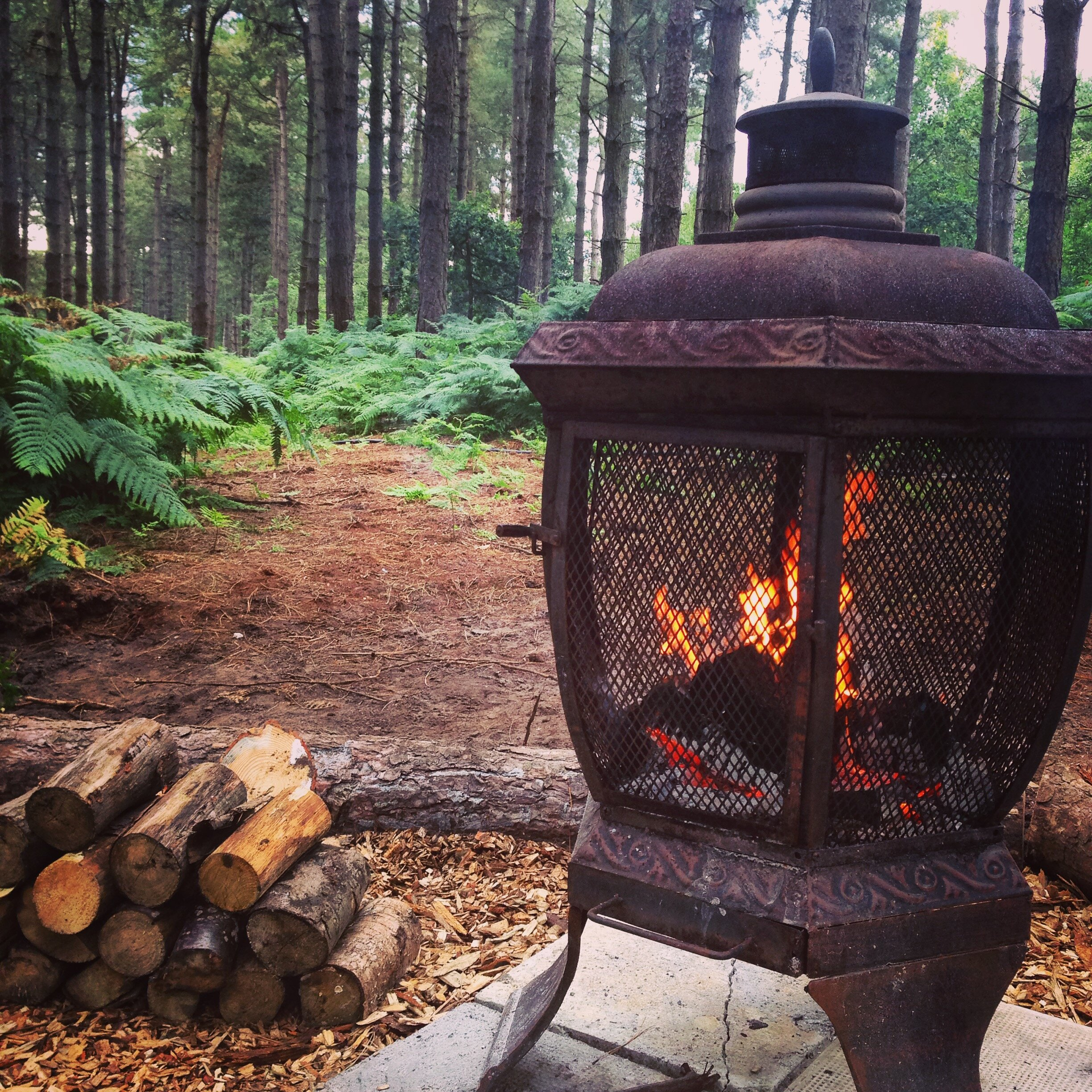 Winter Woodland Glamping in Norfolk