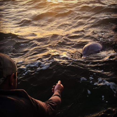 dolphin sunset.png