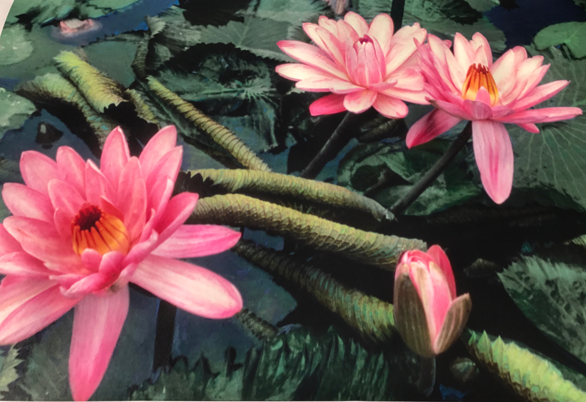 """Monet's Waterlilies  72""""x48"""" - Hand painted photograph on watercolor paper."""