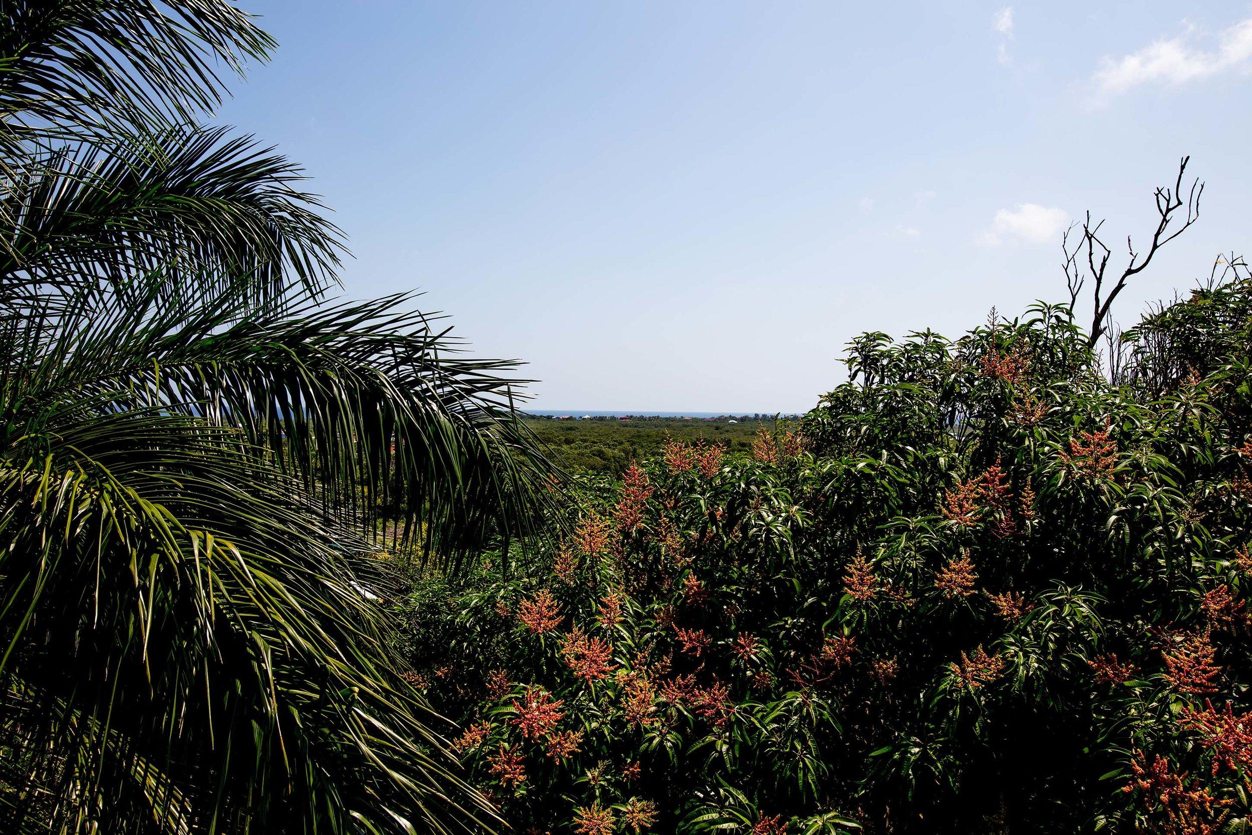 utila bay island accommodations