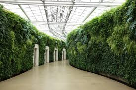 longwood gardens wall of ferns.jpg