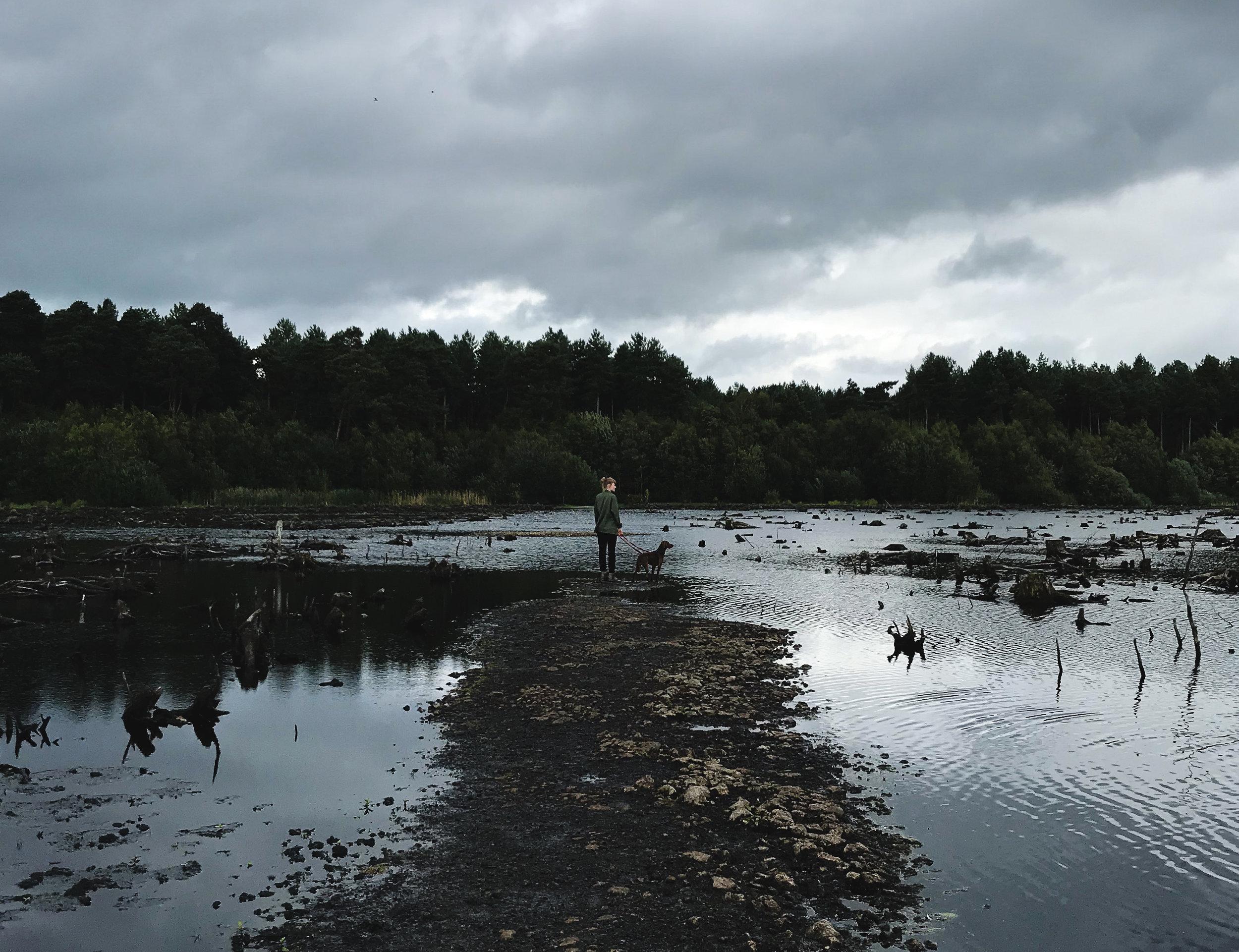 Delamere Forest Walking Meeting
