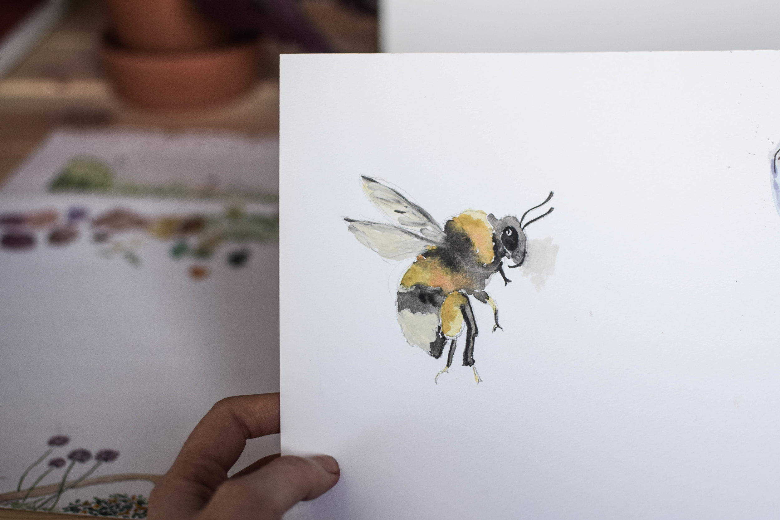 Cheshire Wildlife Trust - Campaign Branding & Illustration