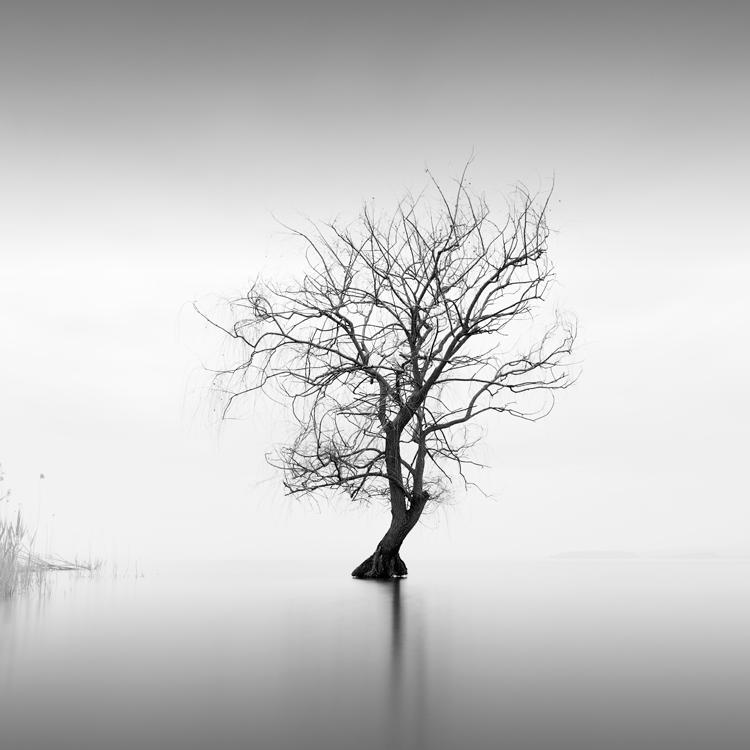 Albero nel lago trasimeno
