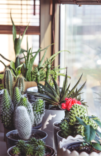 Tips-To-Fall-In-Love-With-Your-Home-add-plants.jpg