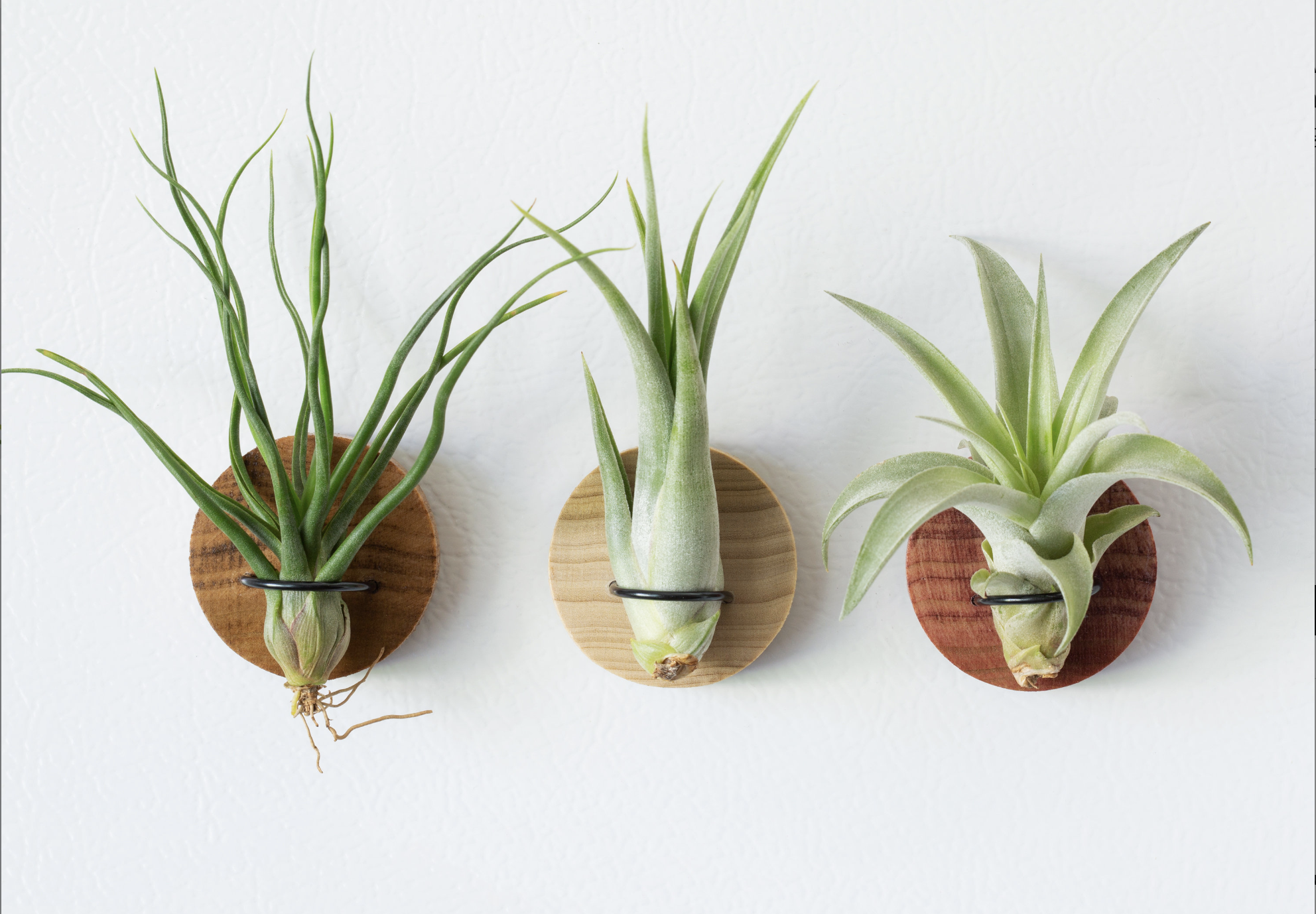 featured - air plant magnets
