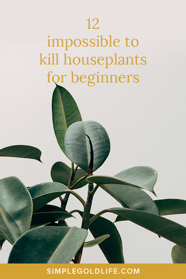 12 Best Houseplants for beginners that are low maintenance and impossible to kill! #houseplants #indoorplants #plantmom
