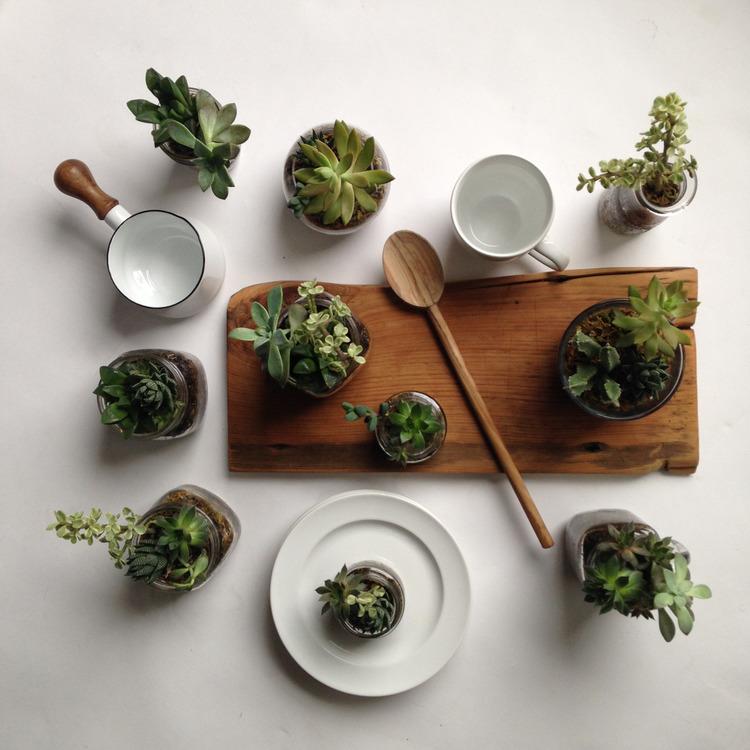 Succulent Feast 01.jpg