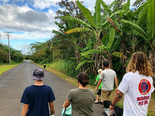 Neighborhood Walk 🌴  #Jesus #Bible #haumana #discipleship #takingastroll #neighborhood #hana #maui #hawaii #aloha #junglife #islandlife #tropical