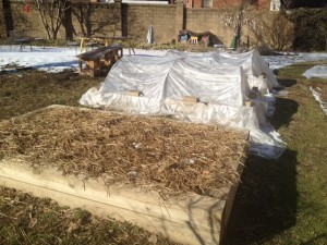 Front bed with spinach, first hoop bed with arugula.