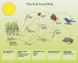 The Interconnected Way of Life in the Soil.