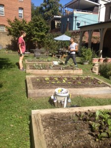 Morgan, on the right, and Emily, our intern, in Pilgrims Sacred Greens garden.