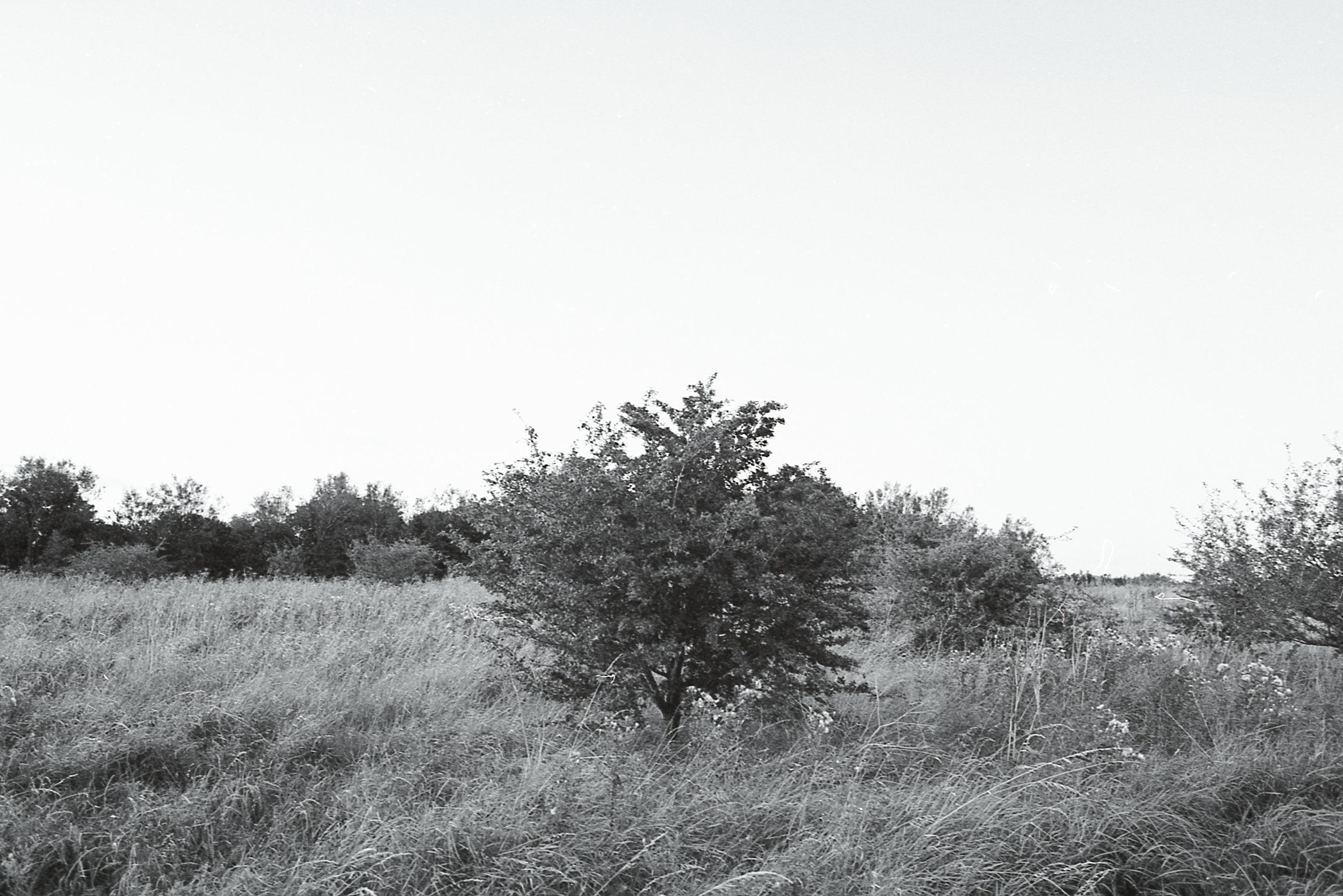 bw4.jpg