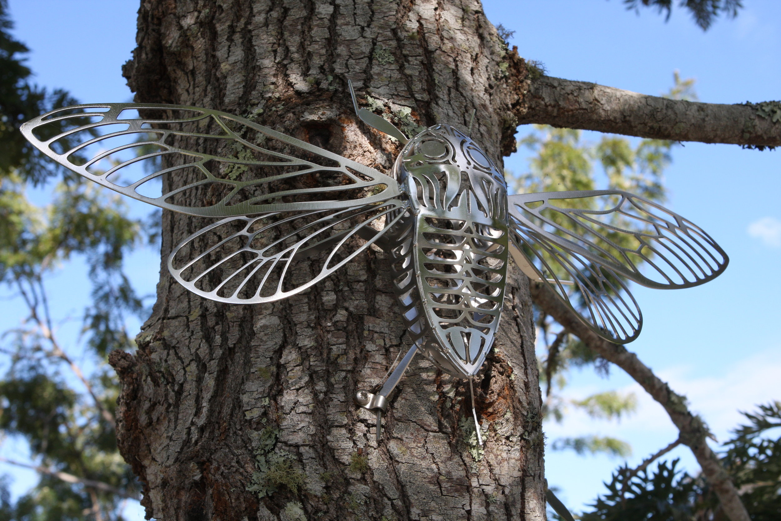 Cicada IMG_6654.JPG