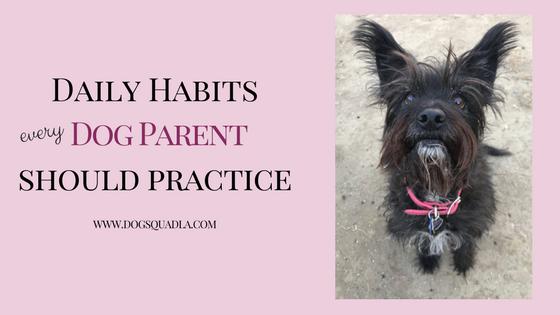 daily habits blog header.png
