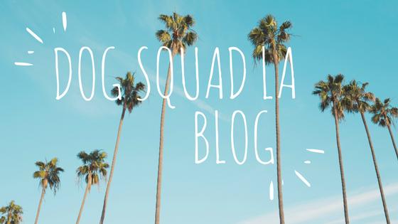 DSLA Blog.png