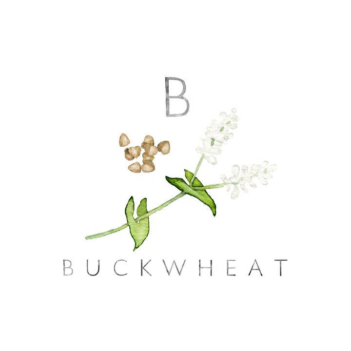 buckwheat copy.jpg
