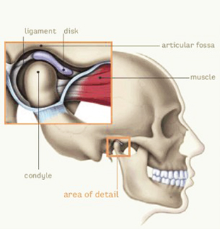 Temporomandibular Joint Tmj Trudenta Half Moon Oms