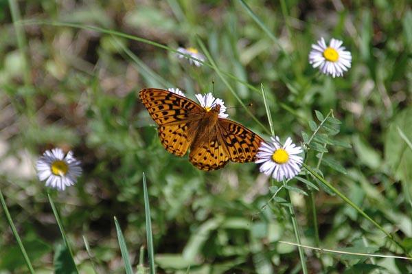 Butterfly-Zion.jpg