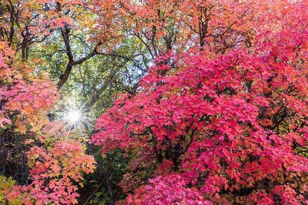 Fall-Colors-Zion.jpg