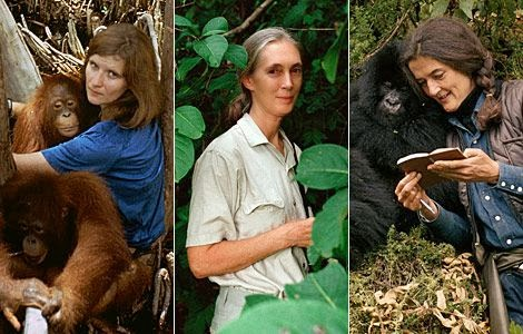The Founding Mothers of Primatology: Birute Galdikas, Jane Gooodall and Dian Fossey (left to right)
