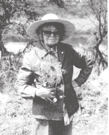 Helia Bravos Holis (1901 - 2001) was a 20th century  botanist  from  Mexico  who focused on the many cactus species found in her home country.