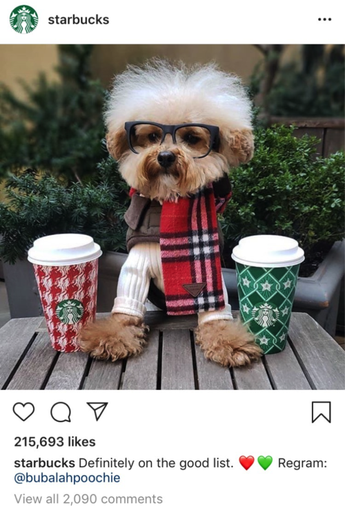 Starbucks+dog+example.png