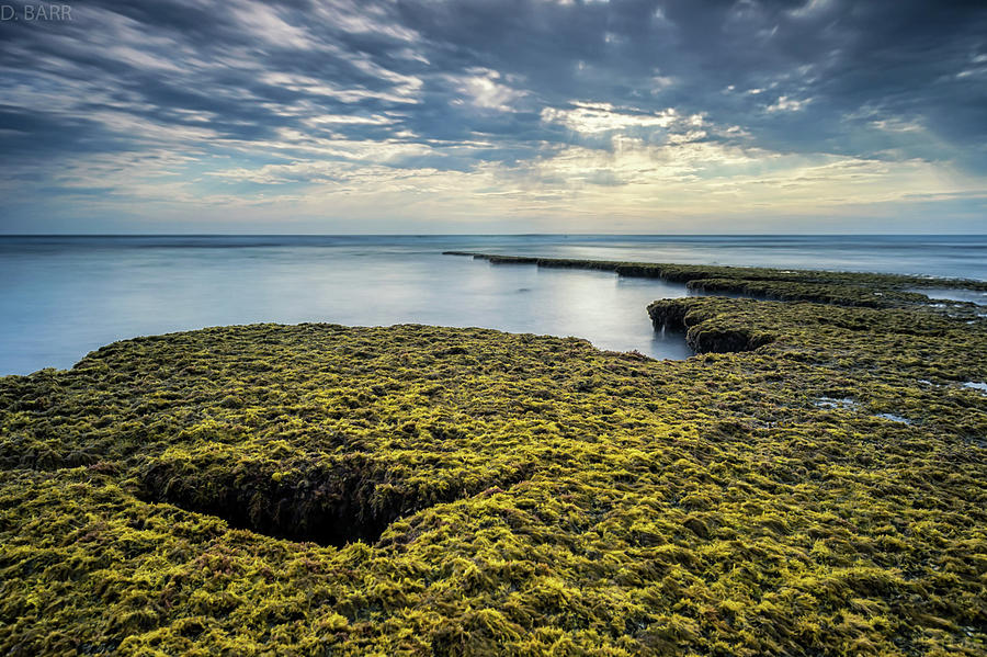 low-tide-at-swamis-doug-barr.jpg
