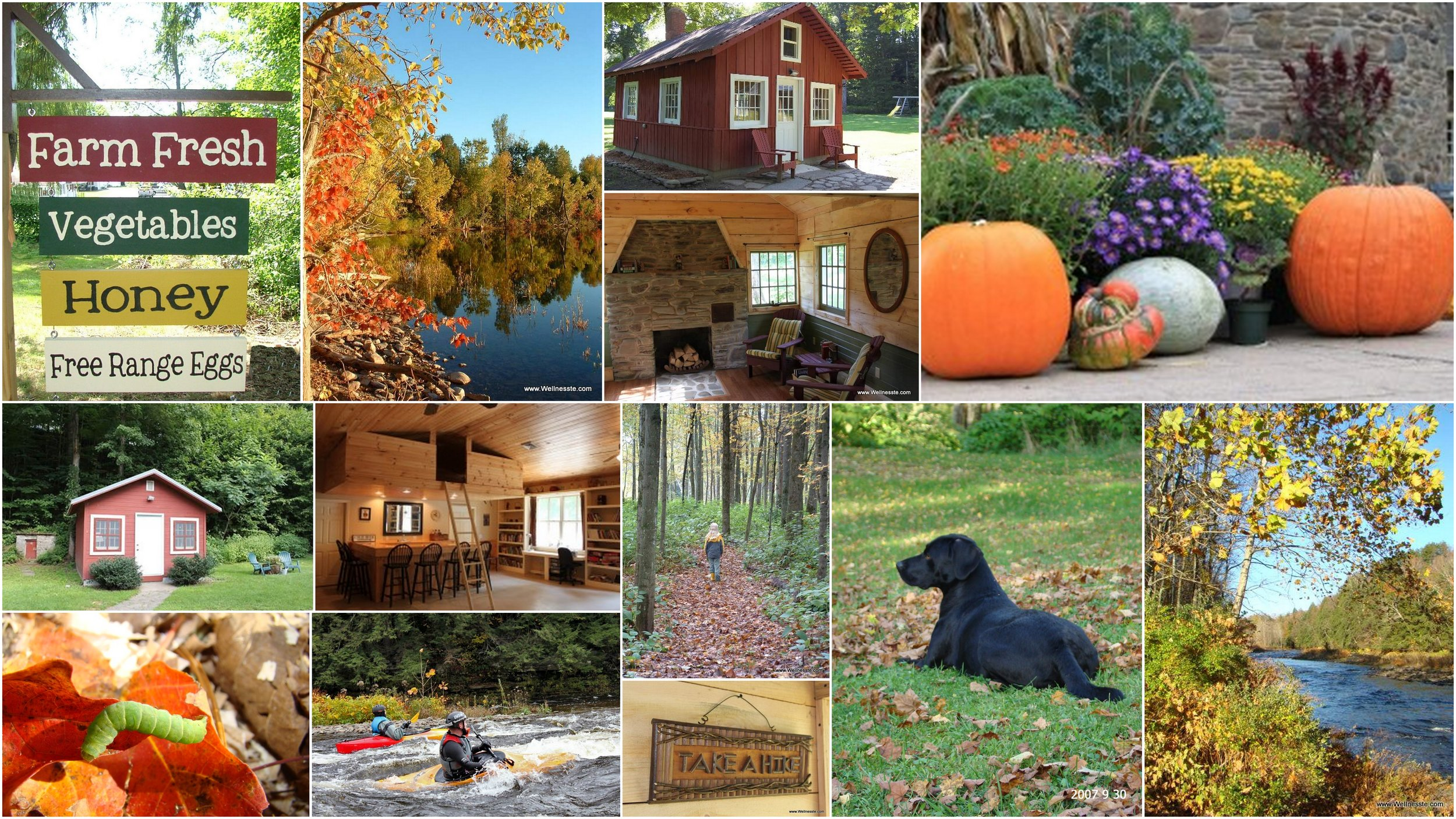 Wellnesste-Cabin-Rentals-Fall-Collage.jpg