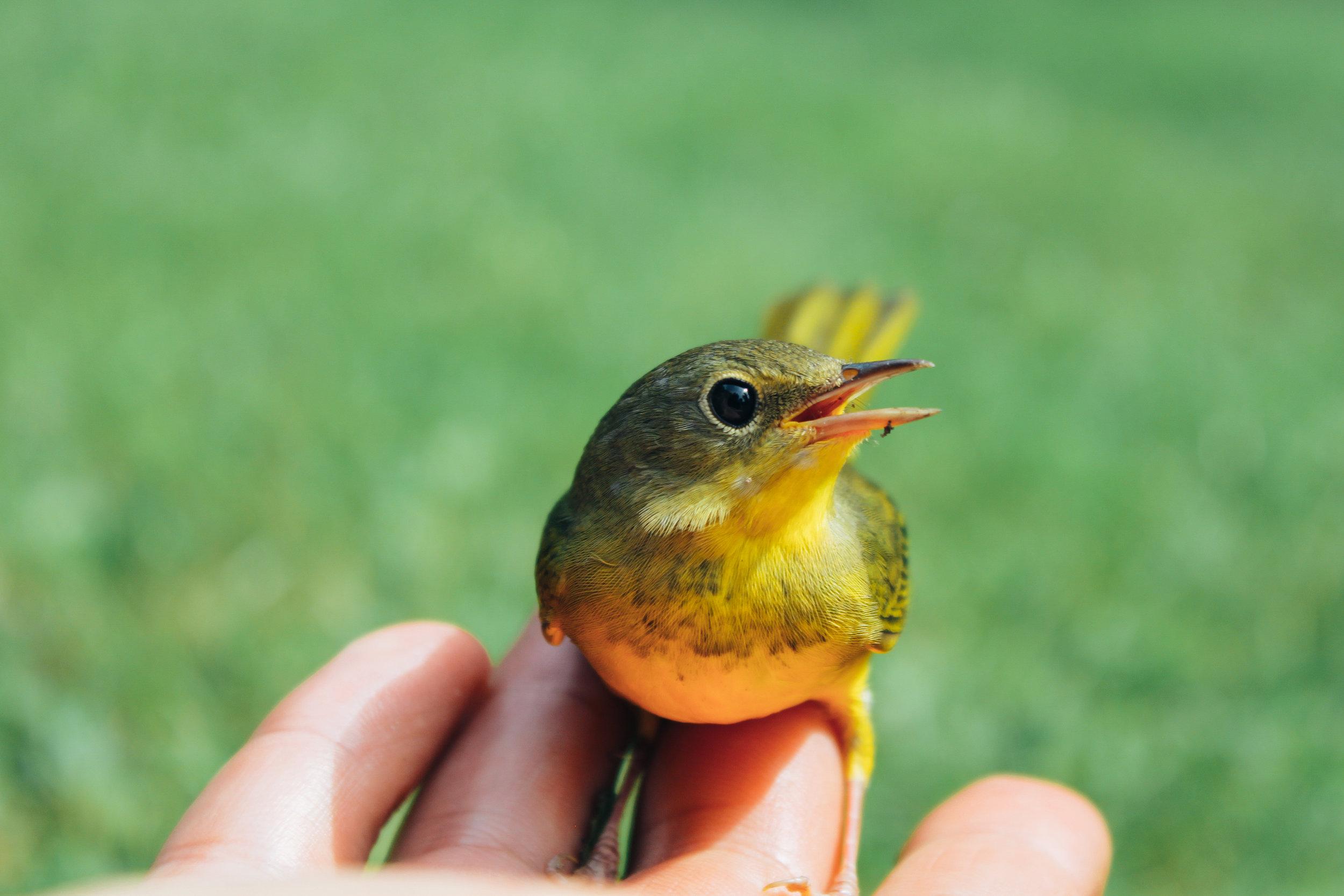 Marin_Birds_1027.jpg