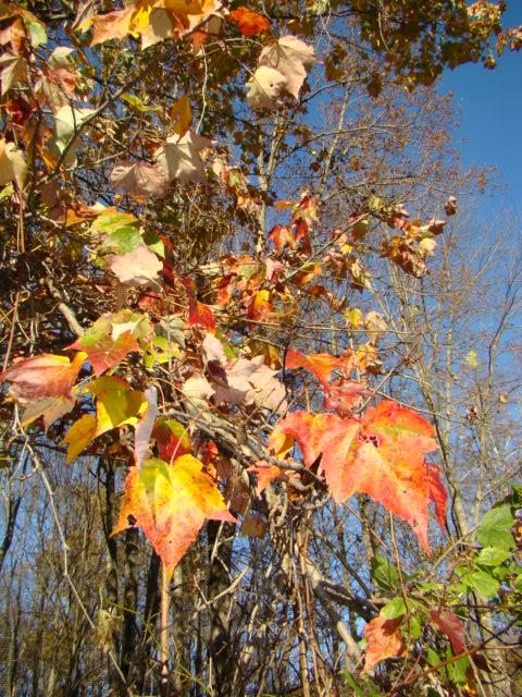 Nature- Fall- leaves.JPG